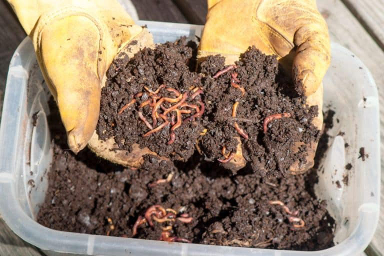indoor worm composting
