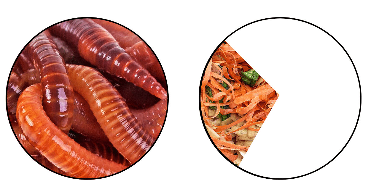 two pie charts showing worms will eat 30% of their weight in food