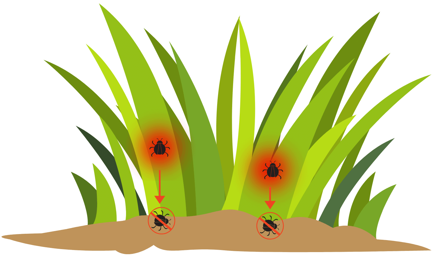Diagram of how a contact lawn insect killer works