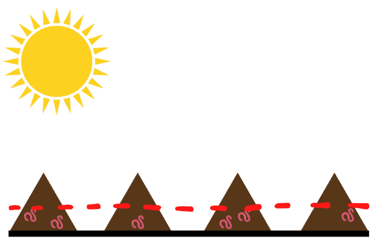 Worm castings are arranged in mounds and exposed to sunlight. Worm are near the bottom of the mounds