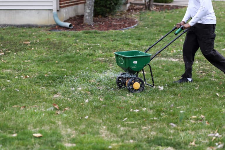 Man uses a broadcast spreader to spread lime on his lawn