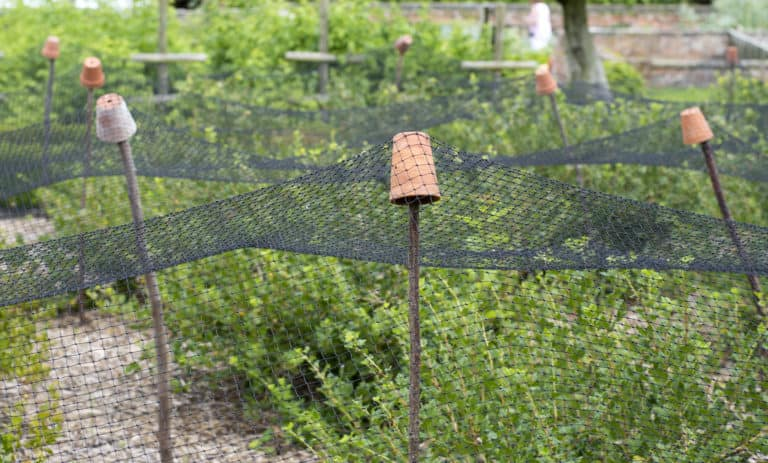 netting protecting plants from birds