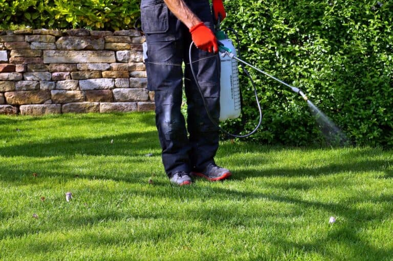 pump sprayer for applying compost tea to a lawn-min