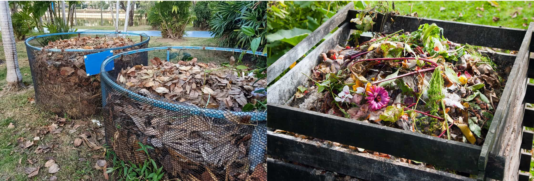 leaf mold and compost