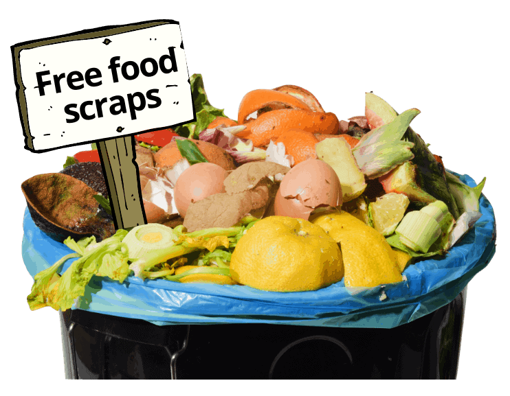 free food scraps ready to be donated for composting