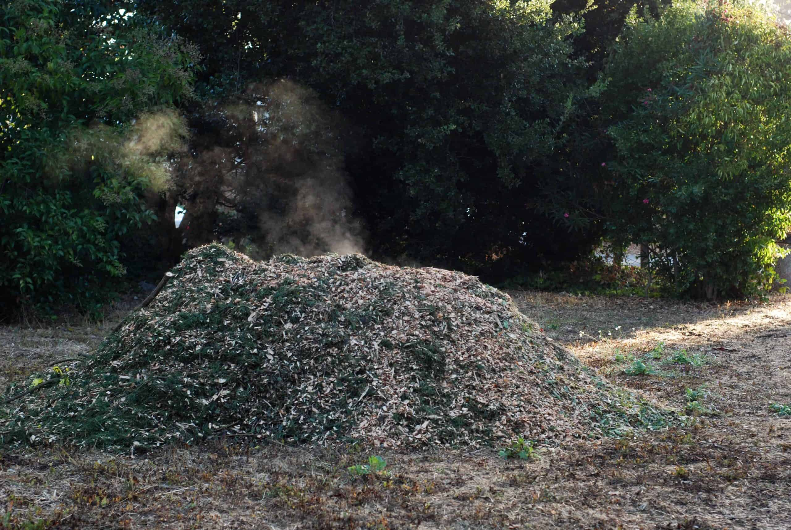 Steaming pile of composting wood chips