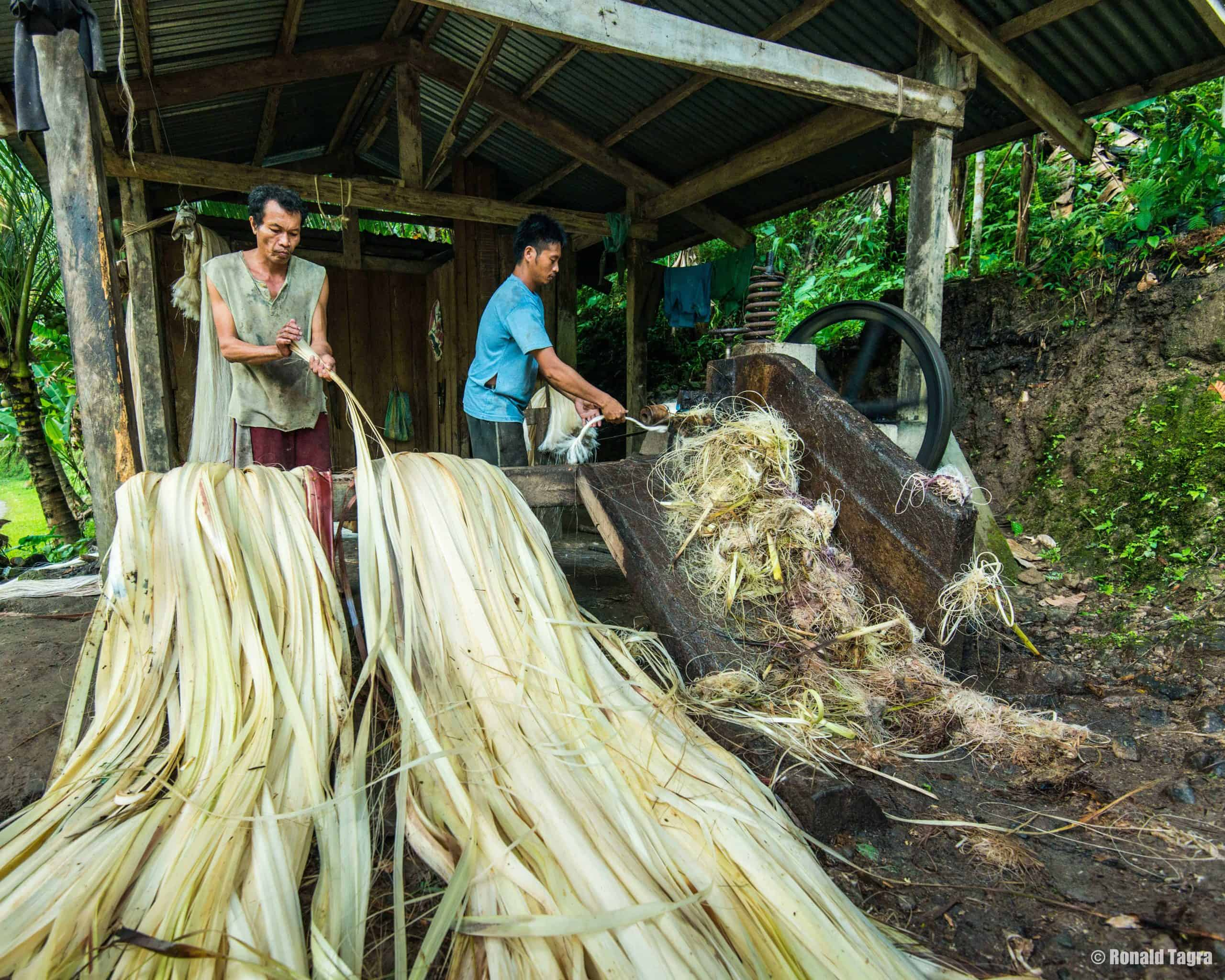 abaca being processed