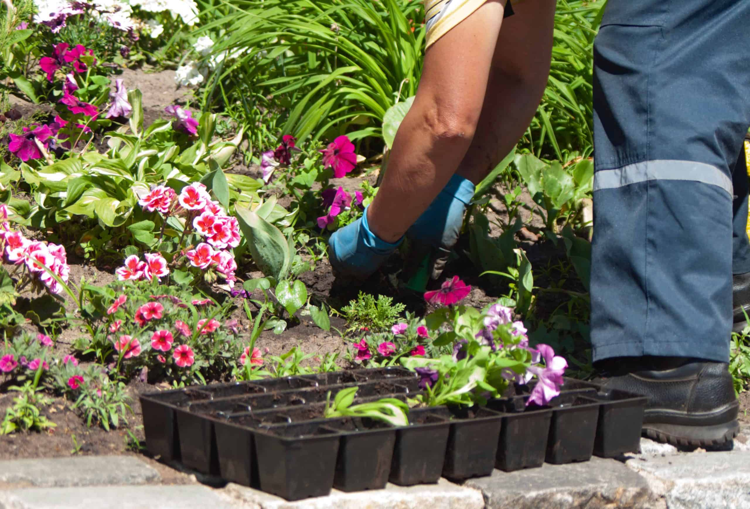 planting flowers with compost