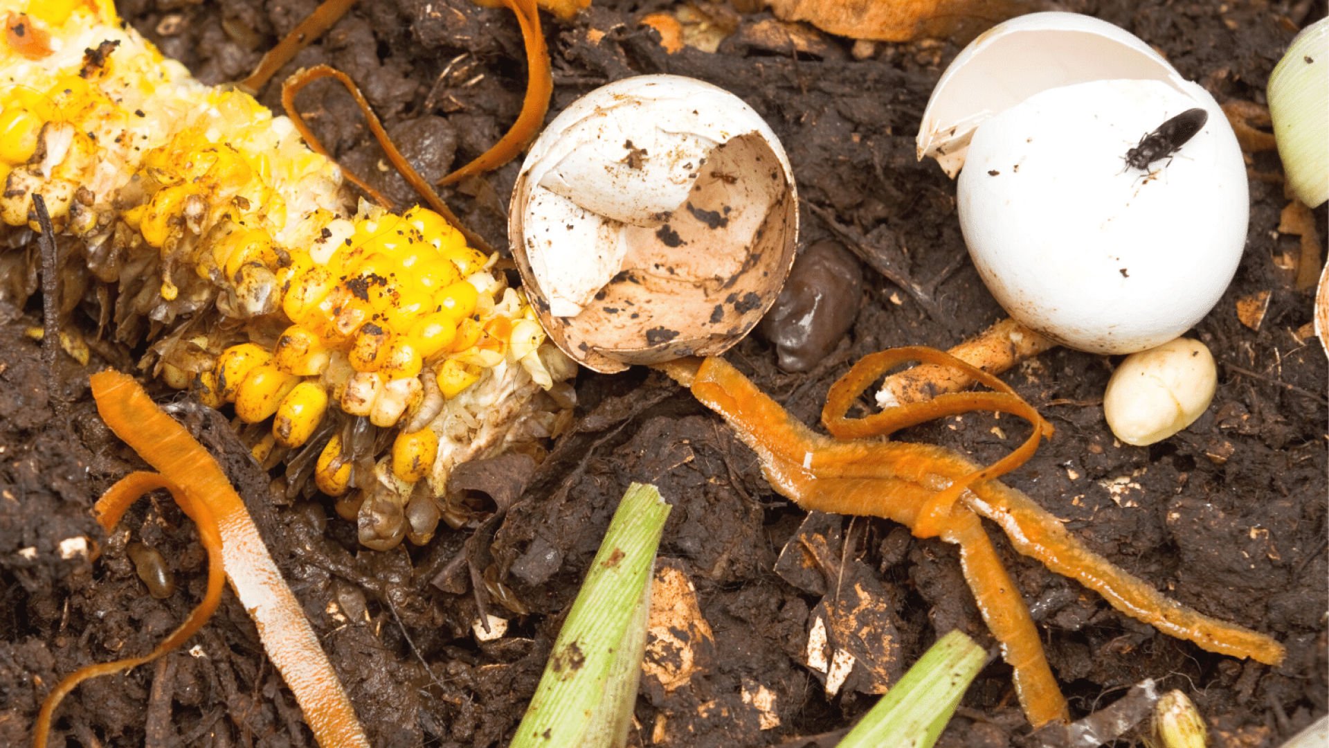 Mealworms or Black Soldier Fly Larvae In Compost: Here's What You Need To Know